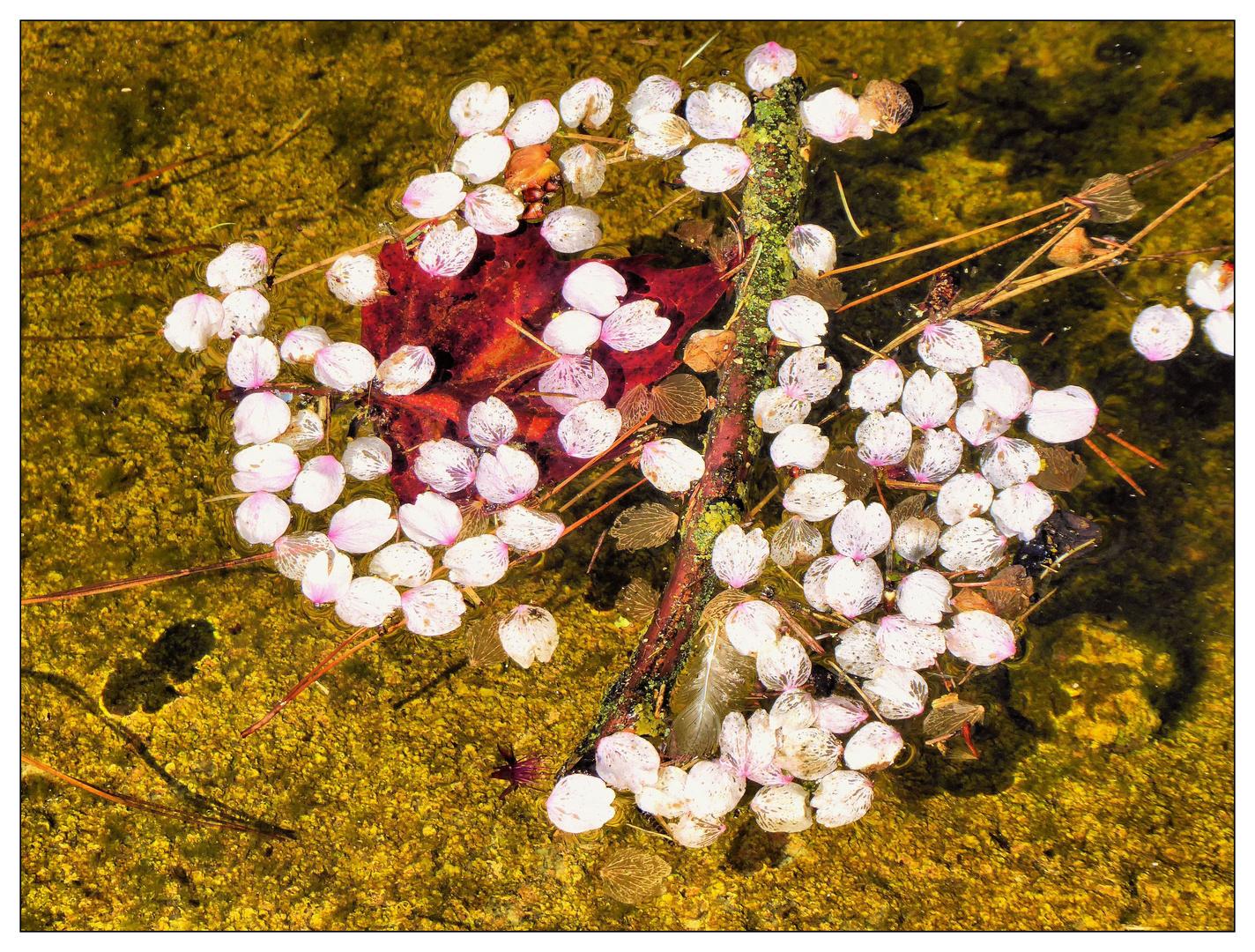 Blütenblätter im Teich