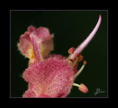 Blütencocktail