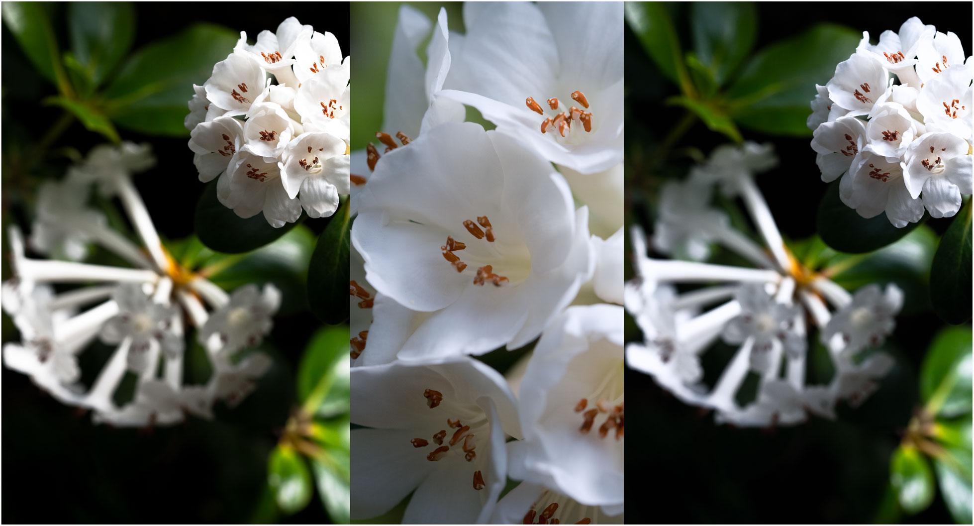 Blütencollage
