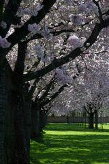 Blütendach....