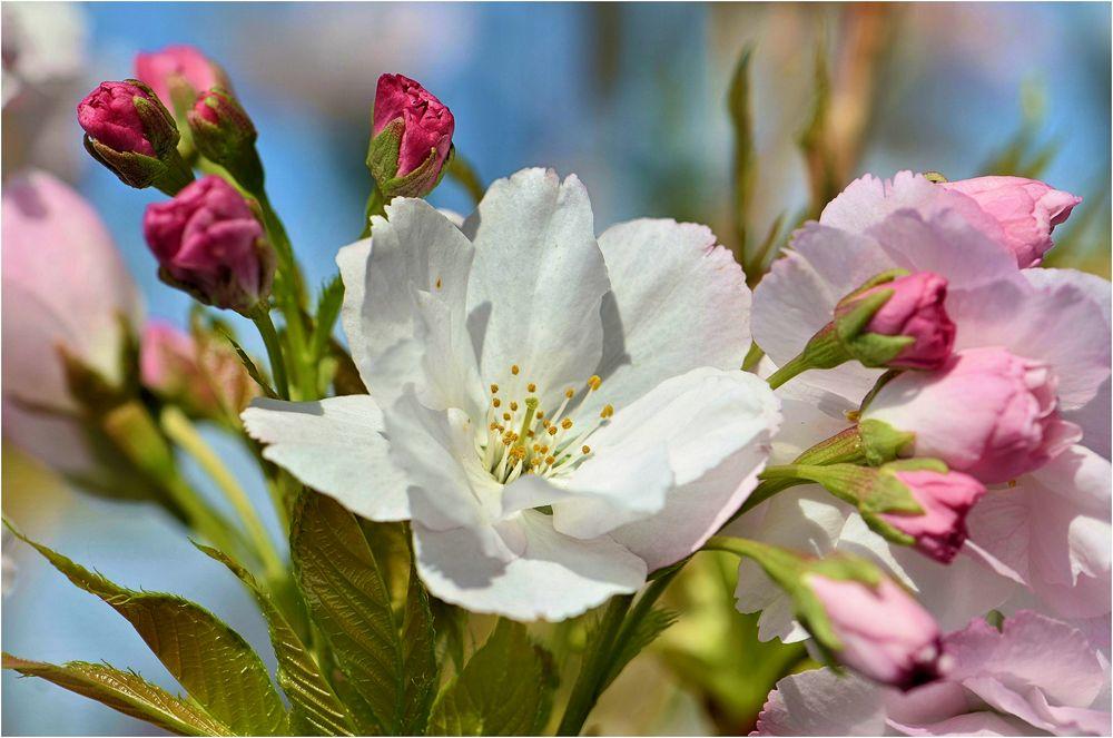 Blütenduft.....