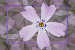 Blütenfantasie