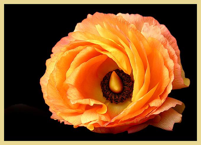 Blütenfarben