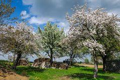 Blütenfest in Biburg