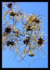 Blüten'Feuerwerk'
