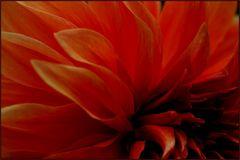 Blütenflammen