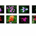 Blütengalerie 1