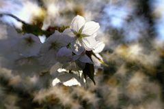 Blütenglitzer