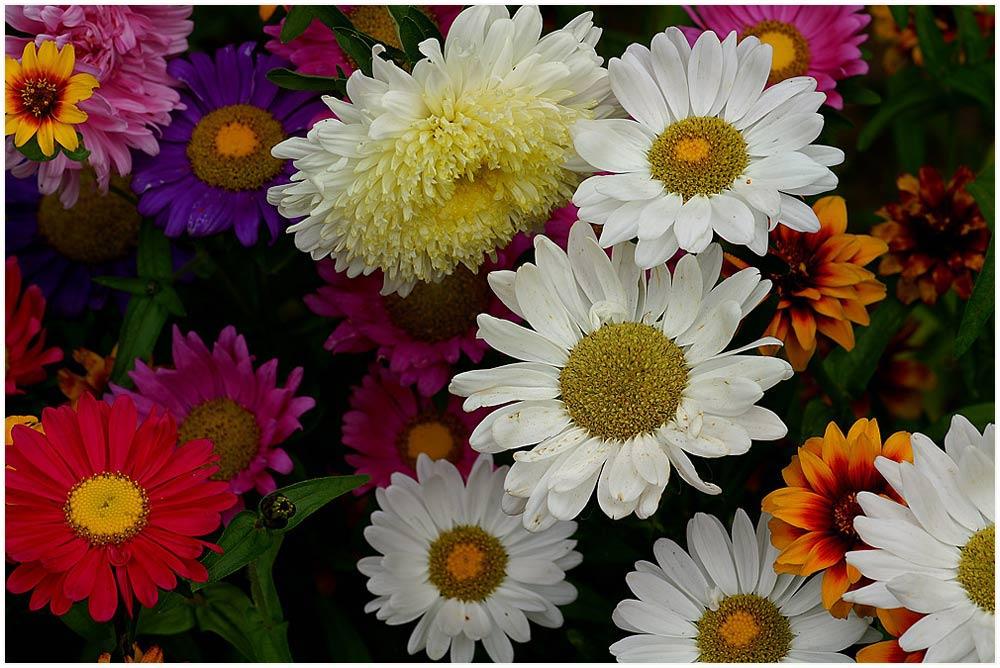 Blütengrüße - Ein bisschen Farbe an einem trüben Tag