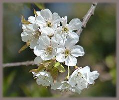 Blütengruß ...