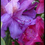 Blütengruß zum Pfingstfest