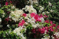 Blütengruß zum Sonntag