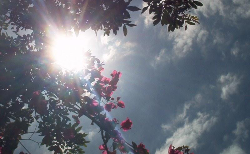 Blütenhimmel...