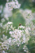 Blütenimpression 39