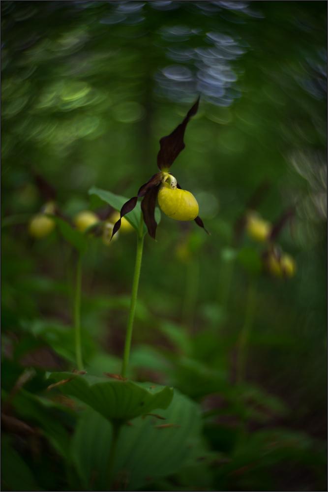 Blütenimpression 76