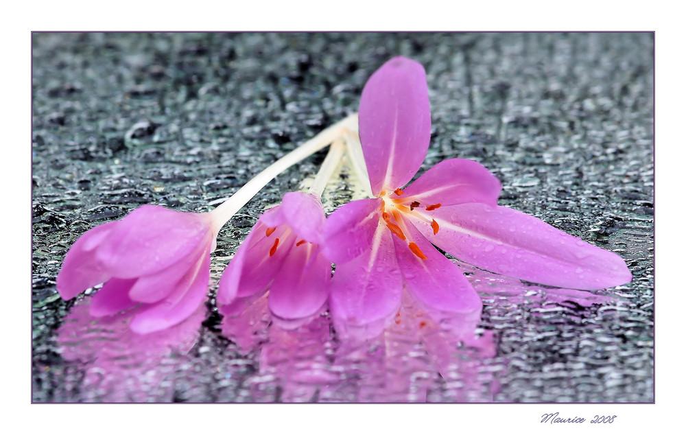 Blütenimpression...