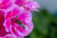 Blüteninspektion (1)