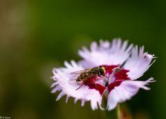 Blüteninspektion (3)