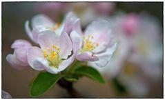 Blütenkarussel