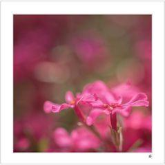 Blütenkissen