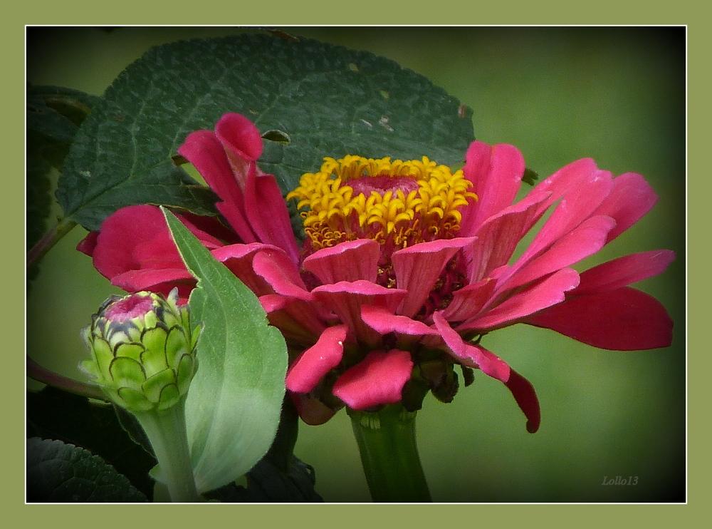 Blütenkranz ...