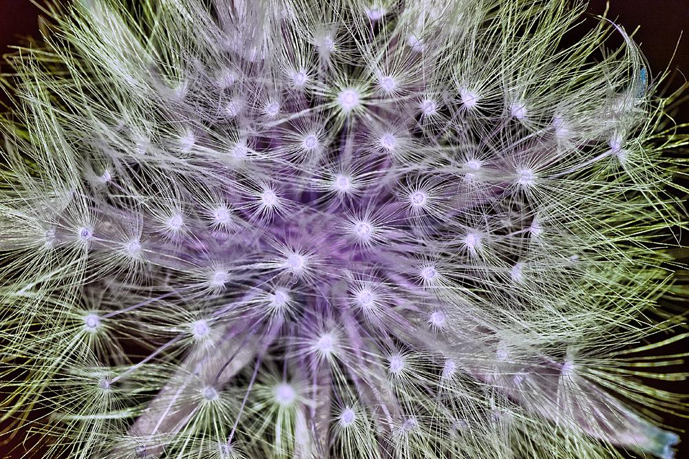 Blütenkristall
