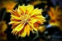 Blütenkunst ...