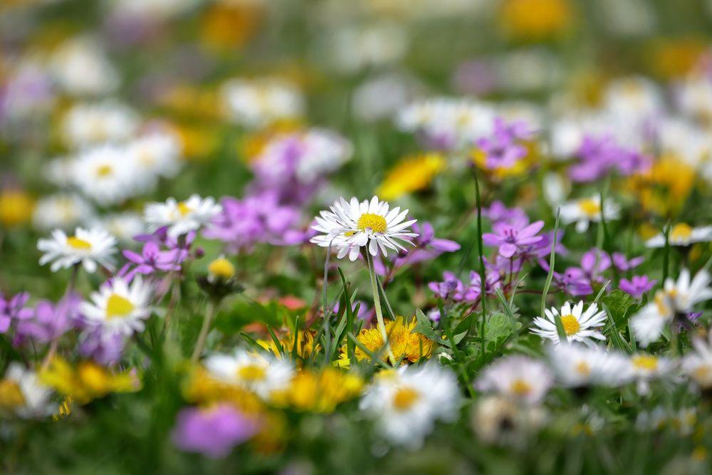 Blütenmeer 2
