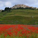 Blütenmeer bei Castelluccio di Norcia