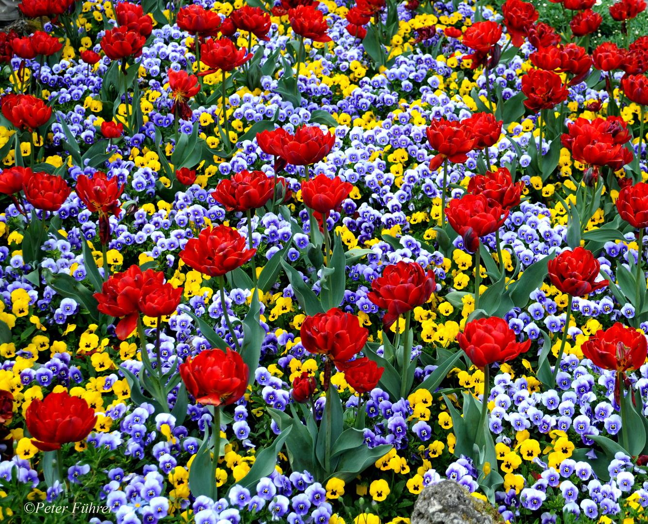 Blütenmeer