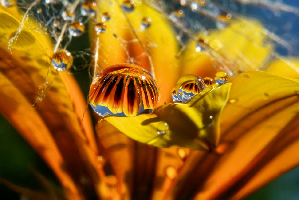 Blütenmeer in Tropfenform