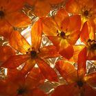 Blütenmeer von unten belichtet