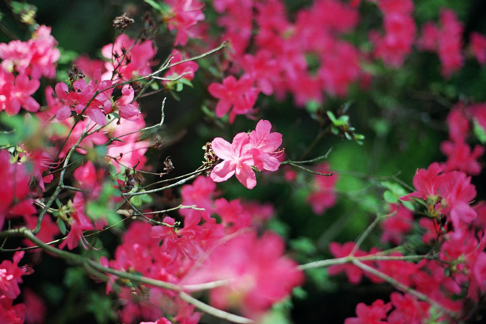 Blütenpärchen
