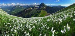 Blütenpanorama (180° Pano)