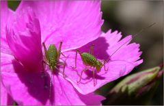 Blütenpfadfinder