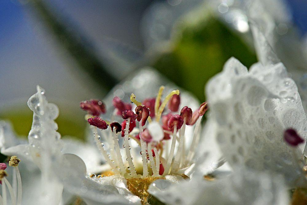 Blütenphantasie von Bernhard Fuchs