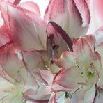 Blütenphantasie No 1