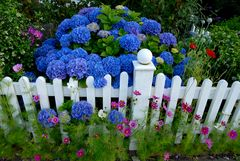 Blütenpower am Ostfriesenzaun