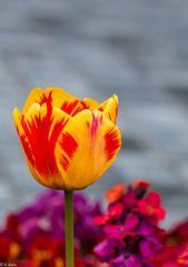 Blütenpracht (10)