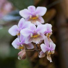 Blütenpracht 4