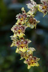 Blütenpracht 5