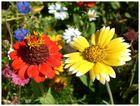 - Blütenpracht -
