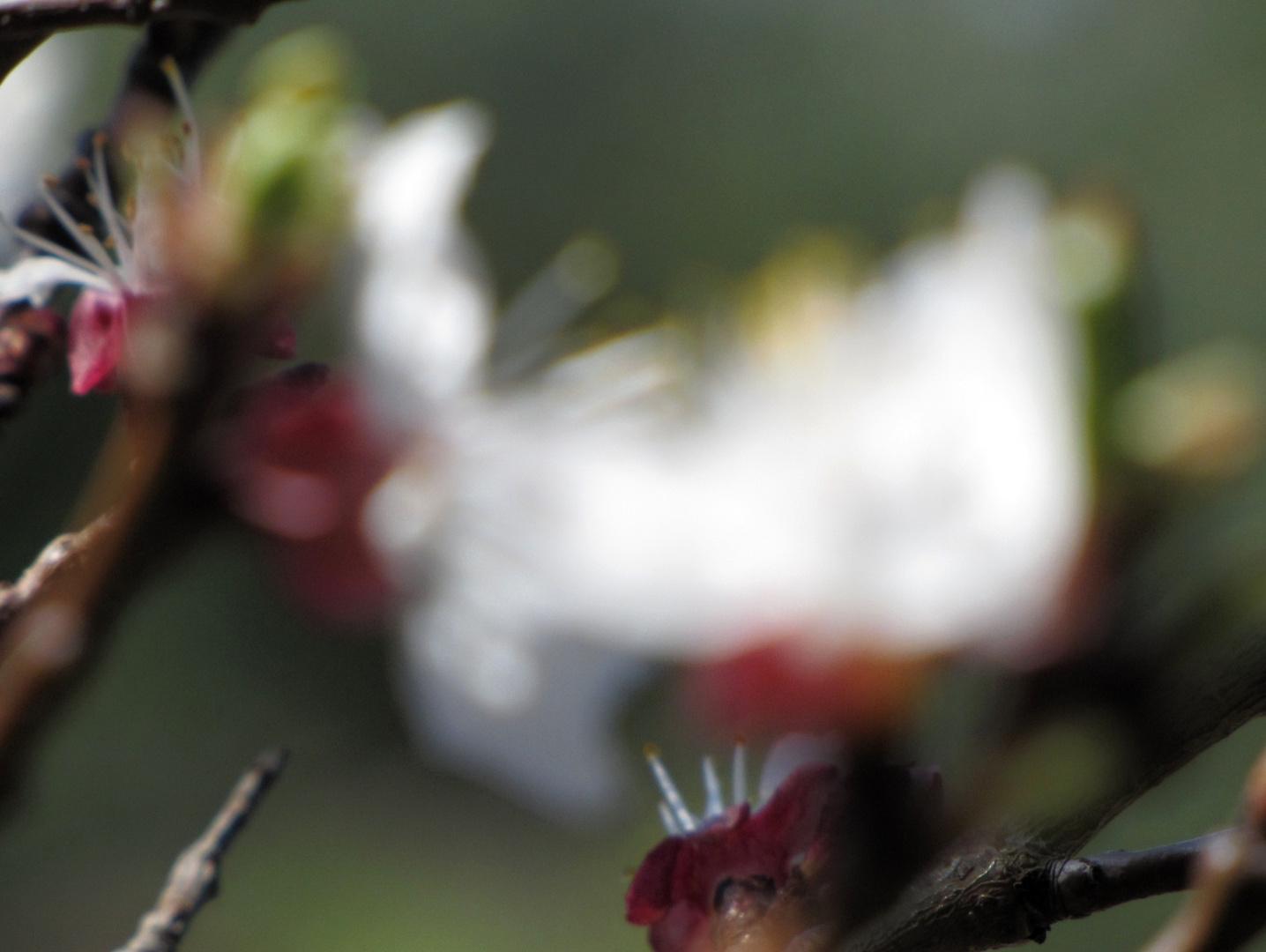 Blütenpracht.