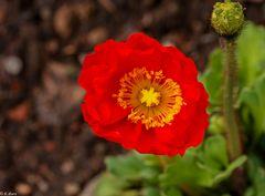Blütenpracht (9)