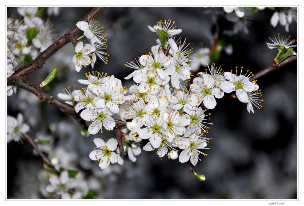 Blütenpracht....