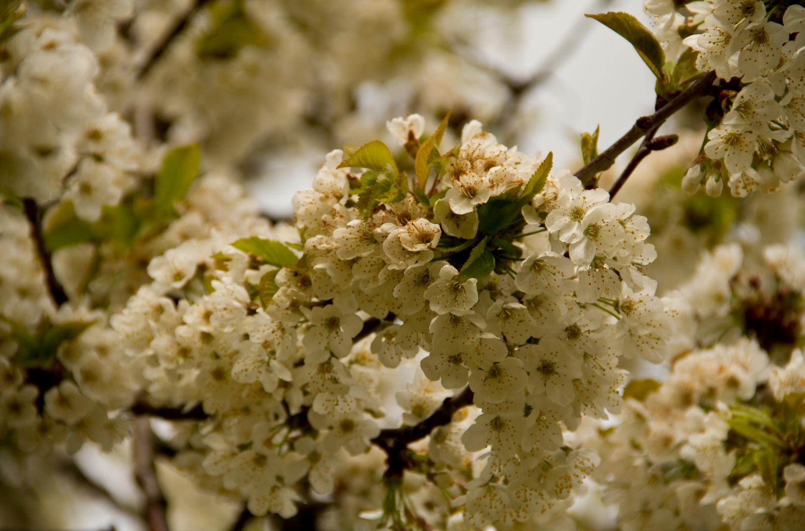 Blütenpracht am Erwachen