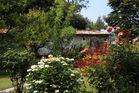 Blütenpracht auf der Isola del Garda