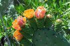 Blütenpracht auf La Palma
