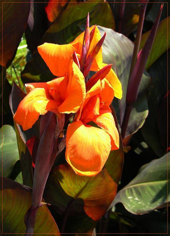 Blütenpracht auf Sithonia