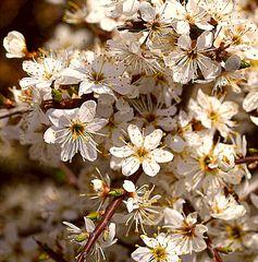 Blütenpracht auf Wotans-Hügel